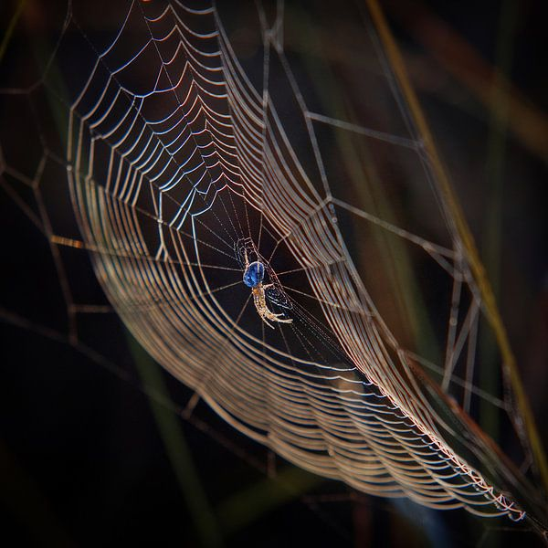 Kleurrijk spinnenweb van Ruud Peters