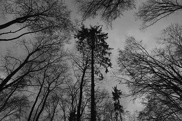 Monochromer Herbstwald van Thomas Wagner