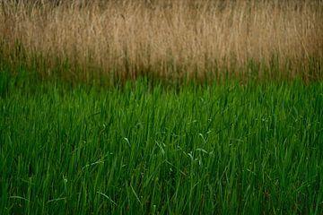 Gras (2016) van Jacques Vledder