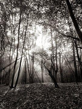 Overstraling in het bos van Bob Bleeker