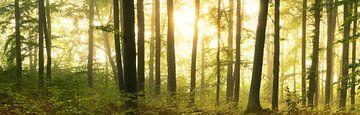Waldpanorama - Leuchten im Laubwald von Tobias Luxberg