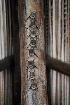 vleermuizen van Berg Photostore