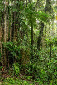 Nebelwald Ecuador #6 von Hanneke Bantje
