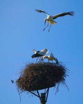 Storch-Absturz von Jeroen Lagerwerf