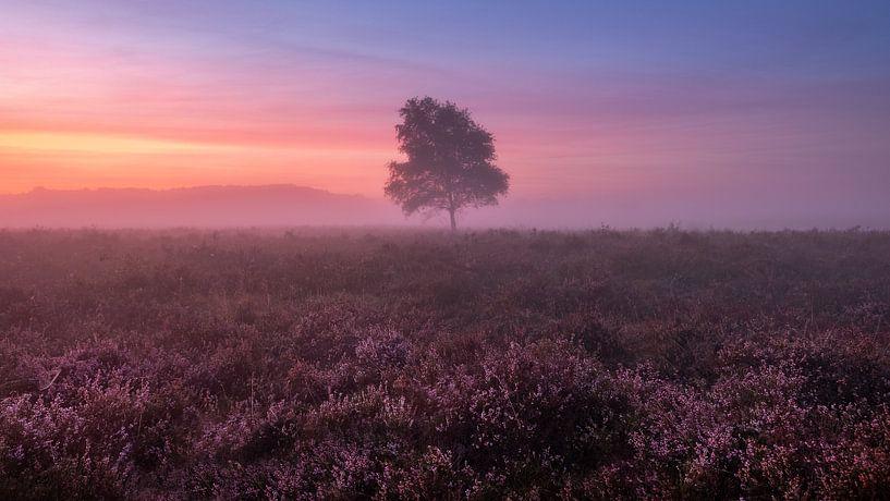 Misty morning van Mario Visser