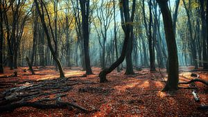 Magisch Speulderbos ,Magic speulderforest.