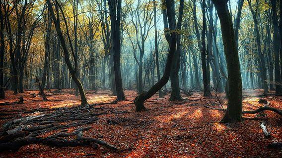 Magisch Speulderbos ,Magic speulderforest. van Saskia Dingemans