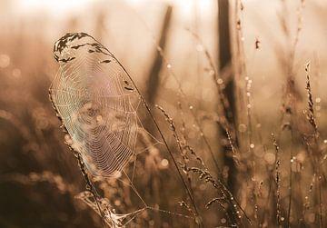 gouden spinnenweb van Tania Perneel