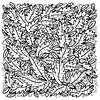Bladeren van Eva van den Hamsvoort thumbnail