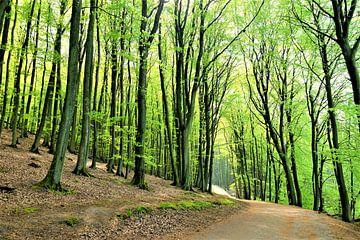 Der schöne Wald von Ostsee Bilder