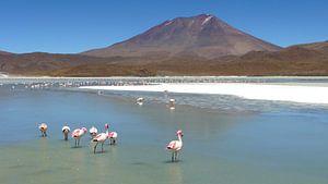 'Flamingo's', Bolivia