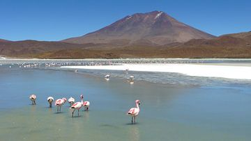 'Flamingo's', Bolivia van Martine Joanne