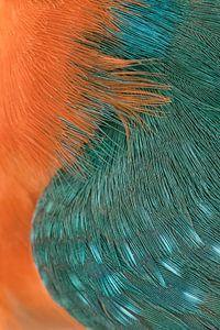 Macro photo of Common Kingfisher von
