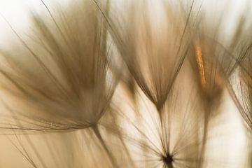 Berührung durch Sonnenlicht von Birgitte Bergman