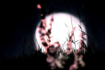 Maanlicht van Marianna Pobedimova