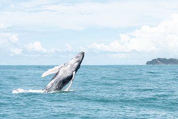 Wale von Merijn Loch
