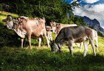 Zuid-Tirol Koe kudde op de alpenweide van Martina Weidner