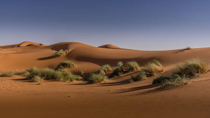 Sahara sur Koos SOHNS   (KoSoZu-Photography)