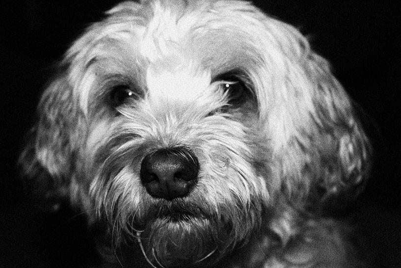 kleiner Hund von iris doff