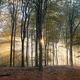 Stralende zonsopkomst in het herfstbos van Cor de Hamer