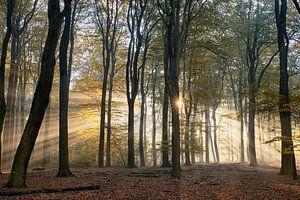 Leuchtender Sonnenaufgang im Herbstwald von