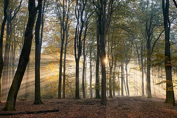 Leuchtender Sonnenaufgang im Herbstwald von Cor de Hamer