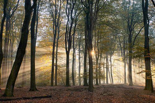 Stralende zonsopkomst in het herfstbos van