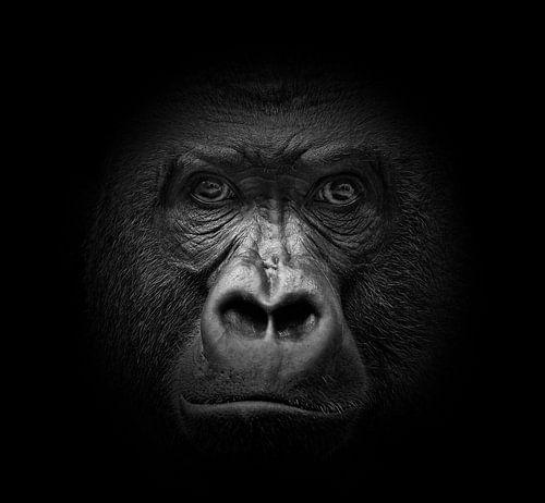 Dark Animal Portraits