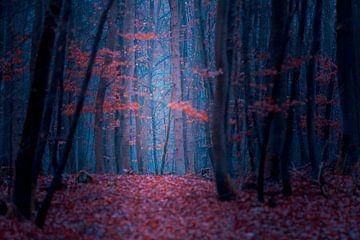 Betoverd bos in de herfst van Robert Ruidl