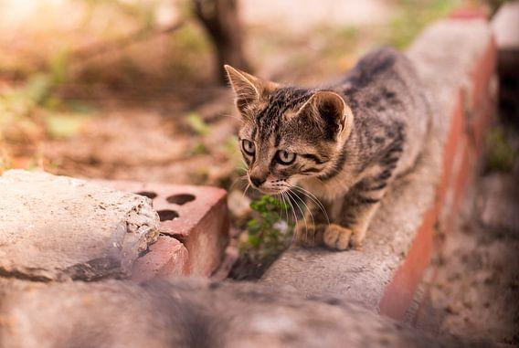 nieuwsgierige kitten van Martijn van Steenbergen