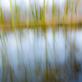 Trees in the water_01 von Herman de Langen