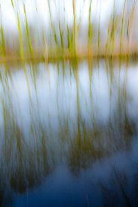 Bomen in het water_01 van