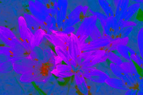 Bloemen in blauw en rose