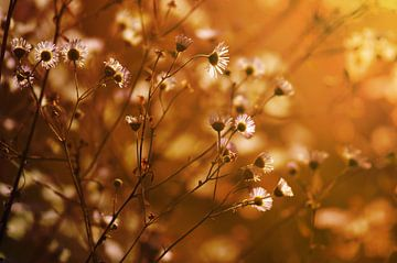 Blumenwiese van zwergl 0611