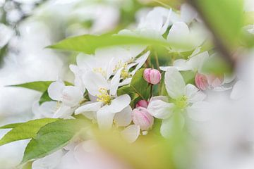 Doorkijkje naar zachte, witte bloesem van Arja Schrijver Fotografie