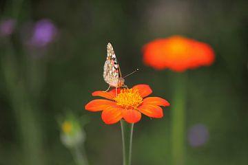 Schmetterling von Thomas Jäger