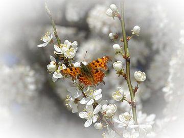 Vlinder op mirabel bloem van Angélique Vanhauwaert