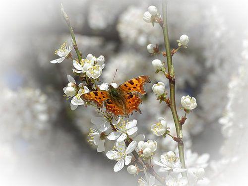 Vlinder op mirabel bloem
