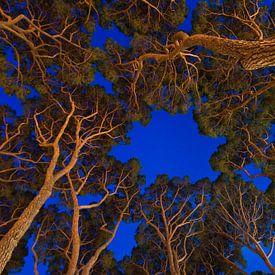 Scary trees van Laura Vink