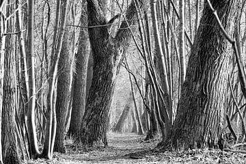 Endloser Waldweg von Robbert De Reus