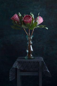 Protea Trio - modernes Stillleben von Remke Spijkers