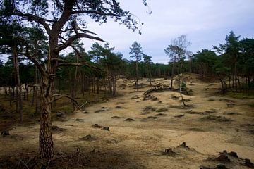 Zandvlakte bij Austerlitz von Fleksheks Fotografie