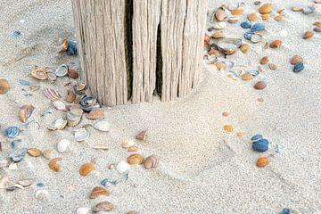Schelpen op strand bij strandpaal. van Ron van der Stappen