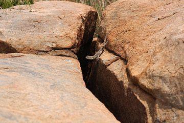 De salamander op de rotsen  van Kim van der Lee