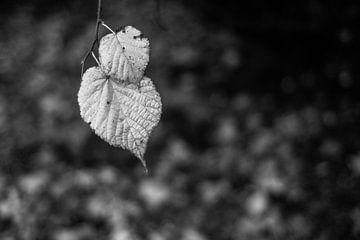 Herbstblätter in monochrom von Timo Bergenhenegouwen