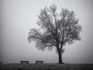 Boom en bankjes in de mist
