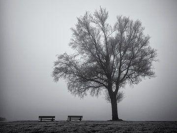 Boom en bankjes in de mist van