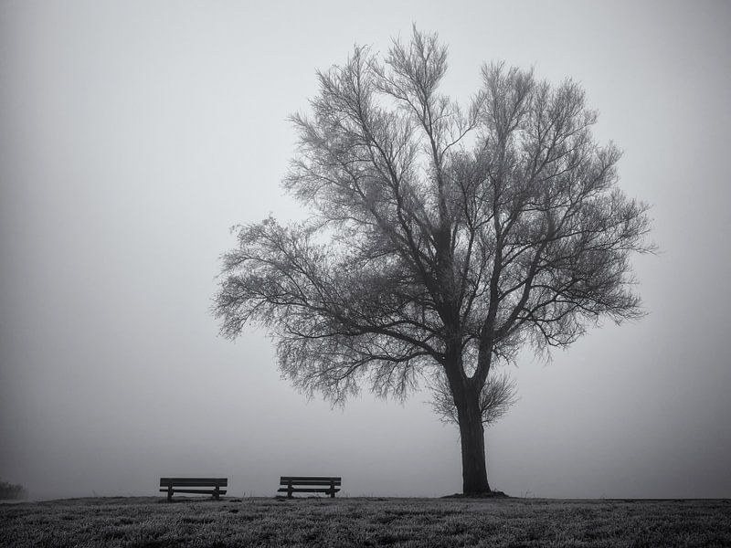 Boom en bankjes in de mist van Paul Beentjes