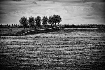 Dijkbomen van ZEVNOV .