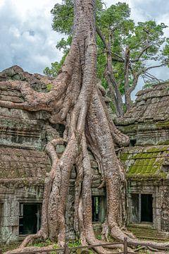 Ta Prohm Tempel, Angkor Wat van